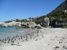 Boulders Beach - a hugely popular attraction for all visitors to SA!