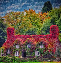 october-afternoons: Enchanting Wales Autumn Glory (by Colormaniac too (Back & catching up)) Oh my goodness. Could you ask for anything more?