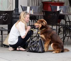 Art Amanda Seyfried takes her dog out for a walk celebrities Amanda Seyfried Dog, Amanda Seifried, Star Wars, Together Forever, Dog Photos, First Photo, Cute Pictures, Cute Animals, Pets