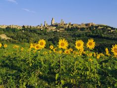 San Gimignano is another stunning medieval city in Tuscany.