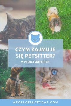 """O profesjonalnej opiece nad kotami rozmawiałam z Joanną Szopińską, catsitterką i założycielką """"Do góry Kotami"""". Apollo, Cats, Cover, Books, Animals, Gatos, Libros, Animales, Animaux"""