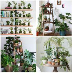Inspiração da Semana – Floresta em Casa