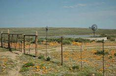 South Afrika, Farm Gate, Free State, Windmills, Far Away, Fences, Abandoned Places, Homeland, My World