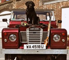 THE DOGS LOVES THE LANDIES