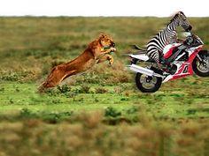 speed......!!!