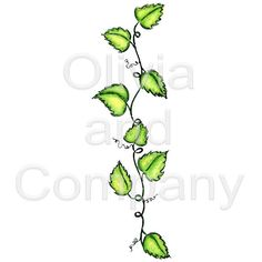 Leafy Vine Border is an original single watercolor image with a transparent background. Watercolor Images, Watercolor Cards, Zen Doodle, Doodle Art, Vine Drawing, Drawing Stuff, Drawing Ideas, Vine Border, Scribble Art