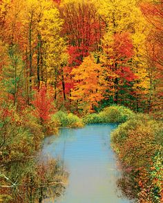 Anybody still have leaves on your trees after Sandy? !!  Autumn Reflection, a 1500 piece jigsaw puzzle by Springbok Puzzles.