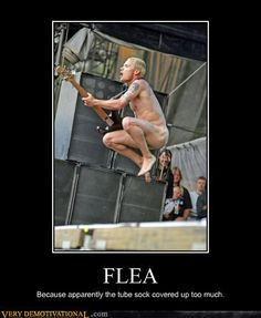 Flea...