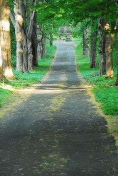Long Driveway by paulaloe, via Flickr