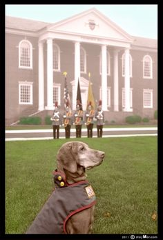"""The PAWtriotic Series - """"Color Guard Cadets"""" ~ www.stayMor.com ~ greeting cards and 2012 calender for the 10th anniversary of 9/11 tragedy. protion of proceeds go to www.VetDogs.org ~ see more at flickr"""