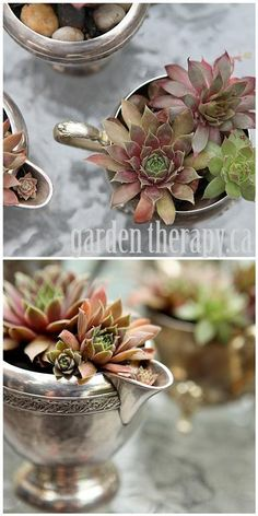 Another pinner's great idea! I love succulents! Hens and Chicks planted in vintage silver cream and sugar serving set - great for table decor or a wedding favor. Garden Planters, Planting Succulents, Succulent Planters, Hanging Planters, Container Plants, Container Gardening, Indoor Gardening, Air Plants, Indoor Plants