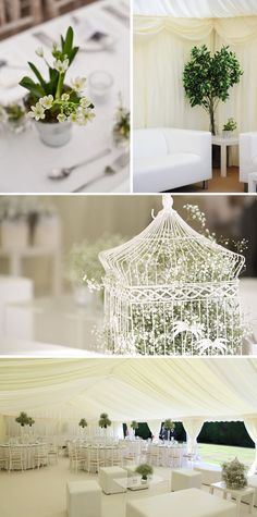 Gypsophila in birdcage