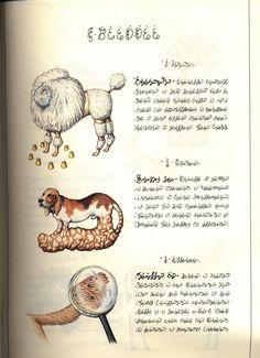 The Codex Seraphinianus by Luigi Serafini