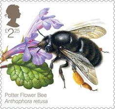 £2.25 stamp – The Potter Flower Bee (Anthophora retusa) found only at a few locations in south-eastern England in dunes, cliffs and commons.