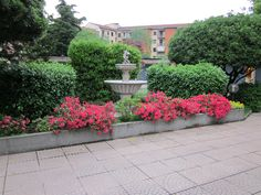Milan, zone 7. Ines' garden