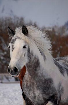 What a beautie!! #horse #equine http://globalhorsecents.com