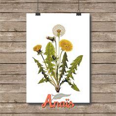 Dandelion flower - Botanical illustration, print, light beige paper, vintage, wall art, decoration by AnaisHomeDecor on Etsy