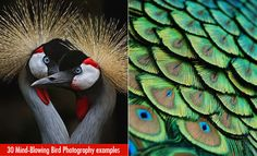 30 Mind-Blowing Bird Photography examples for your inspiration. Read full article: http://webneel.com/30-mind-blowing-bird-photography-examples-your-inspiration | more http://webneel.com/wildlife-photography | Follow us www.pinterest.com/webneel
