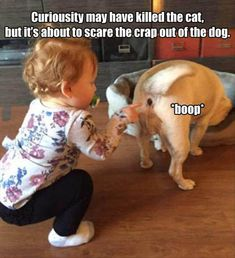 42 Miscellaneous Pics and Memes To Rid Your Mind Of Monotony. Funny Animal Memes, Dog Memes, Funny Animal Pictures, Cute Funny Animals, Best Funny Pictures, Funny Dogs, Cool Pictures, Funny Quotes, Animal Funnies