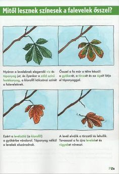 Kis tudósok szókincstára - Évszakok - Kiss Virág - Picasa Webalbumok: Autumn Activities For Kids, Nature Study, Nature Crafts, Fall Halloween, Kindergarten, Homeschool, Science, Teaching, Education