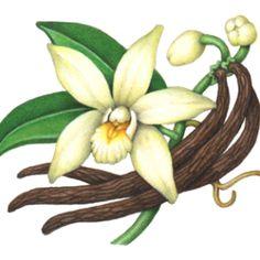 aroma vaniglia
