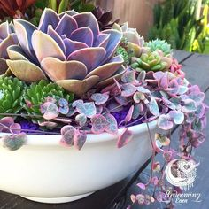 This arrangement features Perle Von Nürnberg and Variegated String of Hearts which are some of our favorite succulent varieties. Coming in store soon. Have a great weekend, everyone!