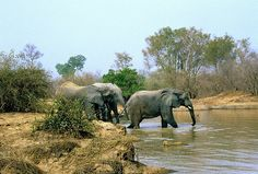 Re-Pin:  Such wonderful opportunities available for those traveling through Ghana.  An African safari is definitely on my bucket list!  Ghana: Mole National Park