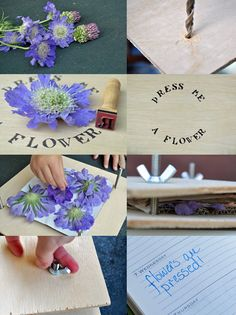 summer craft for kids - pressed flowers