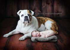 newborn with bulldog