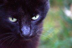 Chat, Animal, Regard Chat
