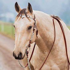 Beautiful horse - Equestrian and horses Most Beautiful Animals, Beautiful Horses, Beautiful Creatures, Horse Girl, Horse Love, American Quarter Horse, Quarter Horses, Western Riding, Horse Riding