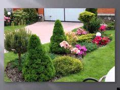 Хвойные растения и рододендроны