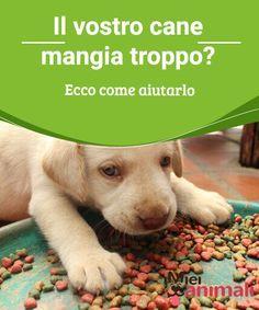 Il vostro cane mangia troppo? Ecco come aiutarlo Anche voi avete un #cane-aspiratutto? Oggi vi spieghiamo come aiutare il vostro cane quando ha il vizio di mangiare #troppo. #Alimentazione