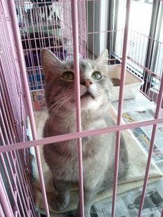 CAT CHAT: A Cat Adoption Story Update! #BtC4A