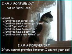 """ICH BIN EINE FÜR IMMER KATZE       Nicht eine """"bis"""" Katze.  Ich bin keine ...      ... """"Bis du dich langweilst"""" Katze      ... """"Bis du einen Freund oder Freundin findest"""" Katze      ... """"Bis du alt bist"""" Katze      ... """"Bis du ein Baby bekommst"""" Katze      ... """"Bis du ein neues Kätzchen bekommst"""" Katze                 ICH BIN EINE FÜR IMMER KATZE  Wenn du das für immer nicht versprechen kannst, dann bin ich nicht Deine Katze…"""