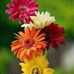 FLOWERS AND NATURE - Comunidad - Google+