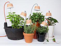 Cynara Grow Lamp By Bulbo
