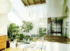 Pictures Of House Plants - Decorating With Plants   Home Interior Design