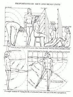 Les proportions du corps | leflux.fr Plus
