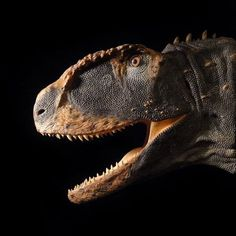 Rugops primus reconstruction by Tyler Keillor