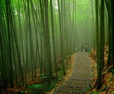 The forests that surround our village here in Nara, Japan are filled with beautiful bamboo. The practical, aesthetic, and spiritual significance of bamboo is deeply embedded in Japanese culture. Th…
