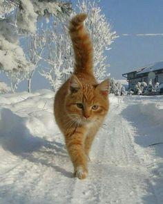 Cat in the snow