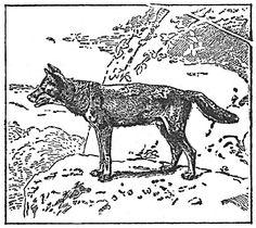 wolf.jpg (1108×990)