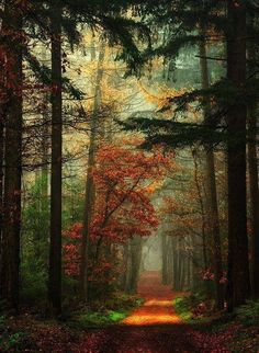 Fairy tail forest Netherlands