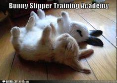 Bunny Slipper Training Academy