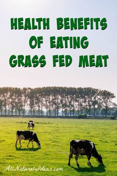 Grass fed meat costs much more than grain fed. Is the expense worth it? Let take a look at the grass fed meat health benefits and why it is worth the cost.