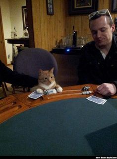 Poker Cat ~ give me two.