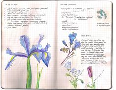 Garden Journal Page May