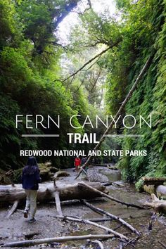 Hiking the Redwood National Park's Fern Canyon Hiking Fern Canyon at Redwood National & State Parks in California with kids. See this stunning park among the Redwoods. Elk and unicorn man are bonuses! National Park with kids California With Kids, California Coast, California Travel, Northern California, California Redwood Forest, Fort Bragg California, California National Parks, San Diego, San Francisco