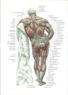 Title Slide of Strength Training Anatomy Edition Abdominal Muscles Anatomy, Muscle Anatomy, Body Reference, Anatomy Reference, Art Reference, Human Anatomy Drawing, Anatomy Study, Best At Home Workout, At Home Workouts